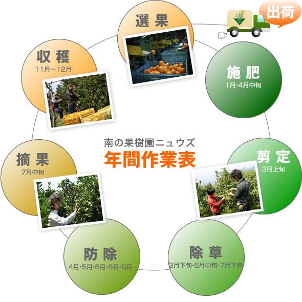 愛媛県西宇和産みかん直売店うえんず農園の温州みかんの年間作業表
